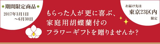 もらった人が更に喜ぶ、家庭用胡蝶蘭付のフラワーギフトを贈りませんか?~期間限定商品【2017年3月1日~6月30日】/お届け先は東京23区限定~
