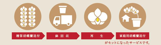 【贈答用胡蝶蘭送付→鉢回収→再生->家庭用胡蝶蘭送付】がセットになったサービスです。